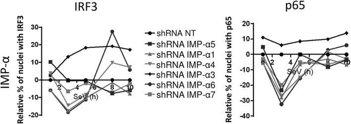 Effect of silencing importin (IMP)‐α adaptors on IFN regulatory factor 3 (IRF3) and NF‐κB p65 nuclear translocation. IMP‐α adaptors are silenced in Sendai virus (SeV)‐infected cells. Relative percentage of cells containing IRF3 (left) and NF‐κB p65 (right) in the nucleus after normalization of the control short hairpin RNA (shRNA) NT to 0 for all time points. Results are presented as average of all shRNAs for each IMP‐α. Individual shRNA results on IRF3 and NF‐κB p65 nuclear translocation, IFNB1 promoter activity and cell proliferation and survival are described in Figure S3