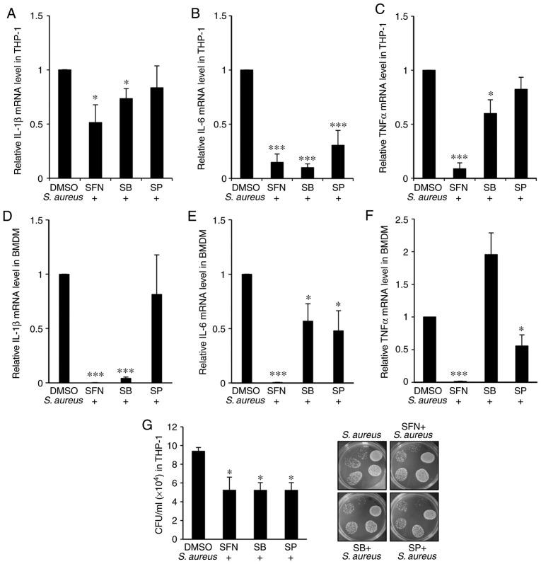 SFN inhibitory effect on p38 and JNK impacts on S. aureus -mediated expression of proinflammatory genes and S. aureus survival in macrophages. (A-C) THP-1-derived macrophages were pretreated with p38 inhibitor SB or JNK inhibitor SP for 1 h prior to 10 µ M SFN or DMSO treatment. After additional 3 h incubation, cells were infected with S. aureus . Total RNA was extracted 3 h post-infection and (A) human IL-1β, (B) IL-6 and (C) TNF-α mRNA expression levels were determined by RT-qPCR (n=4). (D-F) Nrf2 +/− BMDMs were pretreated with SB203580 and SP600125 prior to 10 µ M SFN or DMSO treatment and S. aureus infection. (D) Mouse IL-1β, (E) IL-6 and (F) TNF-α mRNA expression levels were quantified by RT-qPCR (n=5 mice). (G) Intracellular survival of S. aureus was assessed in THP-1-derived macrophages pretreated with SB and SP prior to 10 µ M SFN or DMSO treatment and S. aureus infection. CFU counts were determined 24 h after infection (n=4). * P