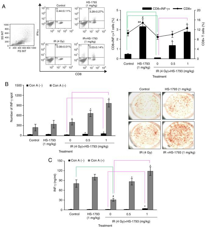 Effect of HS-1793 on IFN-γ expressing CD8 + T cells of irradiated tumor-bearing mice. After the final injections of HS-1793, splenocytes were analyzed for the expression of CD8 and intracellular IFN-γ by flow cytometer and ELISPOT assay. (A) Percentage gated cells of CD8 + T cells and IFN-γ producing CD8 + T cells were calculated. (B) Splenocytes (5×10 4 cells/well) were seeded in ImmunoSpot plates coated with anti-mouse IFN-γ antibody and incubated with stimulant cocktail. ImmunoSpot assay used to show the number of spot and the representative images in each condition. (C) Splenocytes were cultured with concanavalin A (5 µ g/ml) for 24 h and the amounts of IFN-γ in culture supernatants were determined by ELISA. Data reported as the means ± SD from 5 mice per group. # P