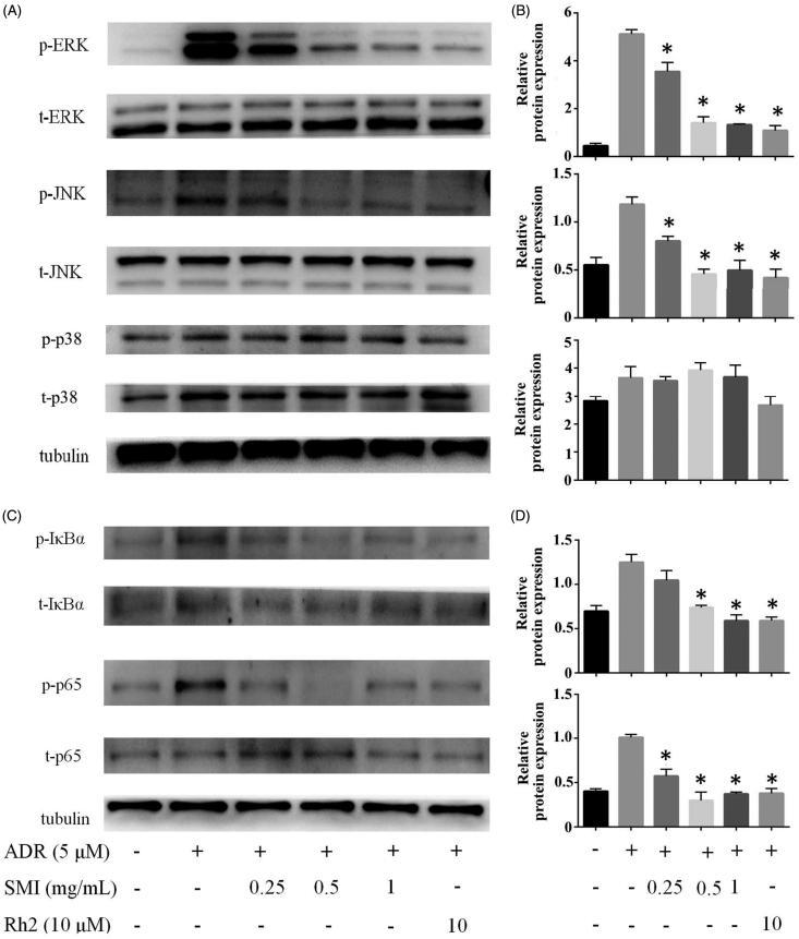 SMI reversed MDR of MCF-7/ADR cell via inhibition of MAPK/NF-κB pathway. (A,B) SMI inhibited the activation of MAPK pathway in MCF-7/ADR cells. (C,D) SMI inhibited the activation of NF-κB pathway in MCF-7/ADR cells. The protein level of p-ERK, p-JNK, P-IκBα, p-p65 was normalized to the level of tubulin, the loading control. Data are the mean ± SEM of three independent experiments. * p