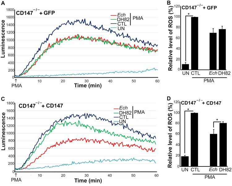 Nucleofection with CD147, but not control GFP plasmid, complements BMDM from CD147 –/– mice for suppression of ROS generation by E. chaffeensis . BMDM from CD147 –/– mice were nucleofected with a CD147-encoding plasmid (CD147) or control plasmid for 1 day (A). Nucleofected cells were preincubated with luminol in HBSSd for 15 min and then incubated with E. chaffeensis ( Ech ), DH82 cell lysate, or HBSSd (control [CTL]) at 37°C for 30 min. ROS generation was induced with PMA, recorded (A and C), and analyzed (B and D). UN, unstimulated BMDM in HBSSd without PMA addition. Results represent the means plus SD from at least three independent experiments and were compared by Student's t test. * , P