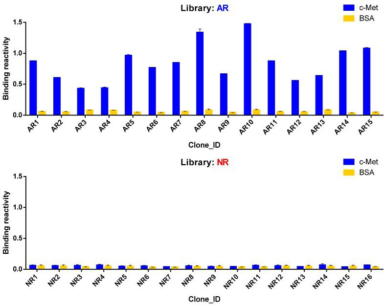 Reactivity of phage-displayed scFv clones in phage ELISA. Binding reactivity of 15 unique clones identified from the AR library and 16 unique clones from the NR library are shown. Wells in microtiter plates were either coated with recombinant mouse c-Met or just blocked with 3% BSA in PBS. Phage clones, HRP-conjugated anti-M13 antibody, and HRP substrate solution were added sequentially with intermittent washing.