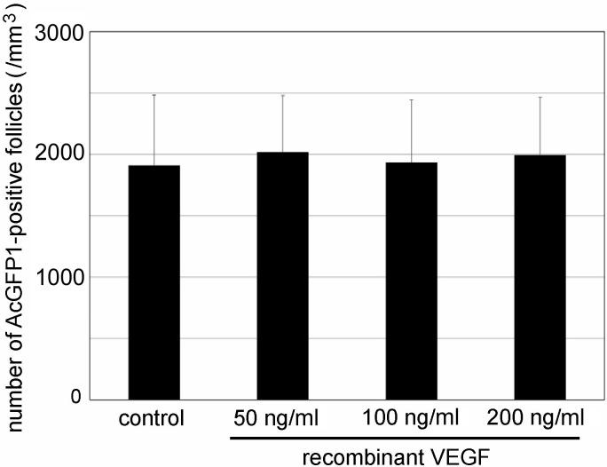 Effect of recombinant vascular endothelial growth factor (VEGF) on the activation of primordial follicles in cultured P0 Oog1pro3.9/R26-H2B-mCherry mouse ovaries. Mean ± SD (n = 3 for 200 ng/ml, n = 4 for 50 ng /ml, n = 5 for 100 ng /ml, and n = 12 for control.