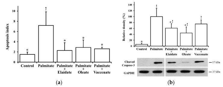 Lipoapoptosis. Cells were treated with BSA (control cells) or BSA-conjugated palmitate alone, or with palmitate in combination with one of the unsaturated fatty acids, elaidate, oleate or vaccenate at 500 µM individual concentrations for 8 h at 70%–80% confluence. ( a ) Apoptotic cells/bodies were detected and counted by annexin and propidium iodide staining and fluorescence microscopy. Apoptosis index was calculated as the relative number of apoptotic cells and expressed as percentage of the total cell number. ( b ) Cleaved caspase-3 was detected by Western blot in cell lysates. The image shows typical results of three independent experiments with two parallels. The results were quantified by densitometry, normalized to glyceraldehyde 3-phosphate dehydrogenase (GAPDH) as a constitutive reference protein and are shown as relative band densities in the percentage of palmitate values. Data in all diagrams are shown as mean values ± S.D; n = 6; statistically significant differences: ! p