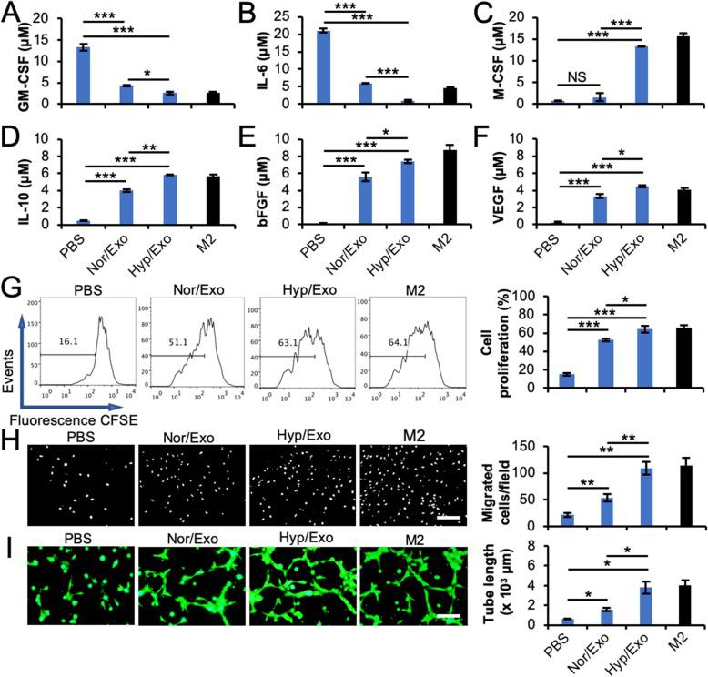 """The factors secreted by M1 macrophages upon treatment with exosomes from ASCs become M2-like. a – f M1 macrophages were incubated with 30 μg/ml Nor/Exo or Hyp/Exo for 48 h. The cells were then washed and incubated in fresh Macrophage-SFM for another 48 h. The culture medium was collected as conditioned medium (CdM). The concentrations of M1-associated cytokines, GM-CSF ( a ) and IL-6 ( b ); M2-associated cytokines, M-CSF ( c ) and IL-10 ( d ); and M2-associated growth factors, VEGF ( e ) and bFGF ( f ), in CdM were measured using ELISA. M2 was used as a positive control. g – i CdM from exosome-polarized M2-like macrophages promotes angiogenesis in CMVECs. M1 macrophages were incubated with 30 μg/ml Nor/Exo or Hyp/Exo for 48 h. The cells were then washed and incubated in fresh Macrophage-SFM for another 48 h. The culture medium was collected and used as CdM. CMVECs were treated with various CdMs from macrophages. Cell proliferation ( g ), migration ( h ), and tube formation ( i ) assays of CMVECs were performed as described in the """" Materials and methods """" section. CdM from M2 was used as a positive control. * p"""