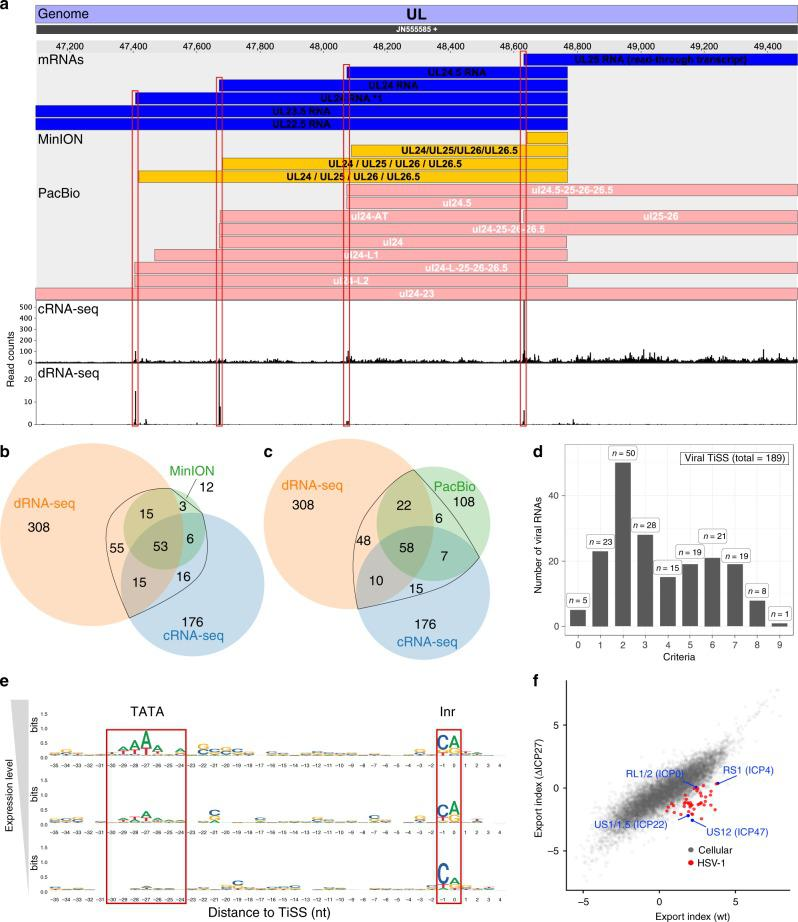 Analysis of viral transcription start sites <t>(TiSS).</t> a Screenshot of our HSV-1 viewer displaying the annotated mRNAs of MinION, PacBio and coverage of read 5'-ends for <t>cRNA-seq</t> and dRNA-seq of the UL22.5-UL25 gene locus. Transcripts in our reference annotation are indicated in blue. b , c Venn diagram depicting the number of Transcription start sites (TiSS) that were identified by cRNA-seq, dRNA-seq and MinION 14 ( b ) or PacBio 13 ( c ) sequencing, respectively. TiSS included into the final annotation are indicated by the black circle. d Histogram depicting the number of TiSS criteria that were fulfilled by the individual viral transcripts. e Sequence logos upstream of viral TiSS with viral TiSS grouped into three equally sized bins according to their transcription rates (top: highest; bottom: lowest). The TATA-box and initiator element (Inr) are shown. f Log fold-change between cytoplasmic and chromatin-associated FPKM-normalized read counts (export index) of cellular (gray) and viral (red and blue) gene clusters compared between wild-type HSV-1 (wt) and a null mutant of the viral RNA export factor ICP27 (ΔICP27). Viral immediate early genes are indicated in blue.