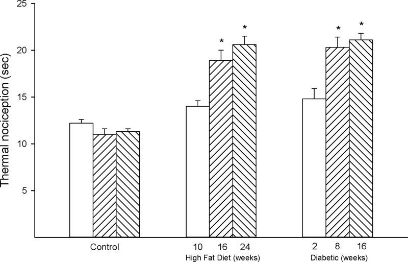 Effect of duration of obesity or type 2 diabetes on thermal nociception. Thermal nociception was examined as described in the 'Methods' section after 22 (open bars), 28 (left hatch bars) or 36 (right hatch bars) weeks of age in Sprague Dawley rats fed a normal diet or in rats fed a high-fat diet at 12 weeks of age for 10 (open bars), 16 (left hatch bars) or 24 (right hatch bars) weeks or in type 2 diabetic rats that were treated with a low dose of streptozotocin after 8 weeks of a high-fat diet and 2 (open bars), 8 (left hatch bars) or 16 (right hatch bars) weeks of hyperglycemia. Data are presented as the mean ± SEM. in sec. The number of rats in each group was 12. *p