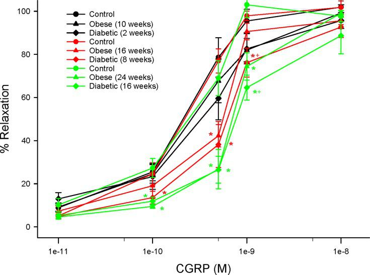Effect of duration of obesity or type 2 diabetes on vascular reactivity to calcitonin gene-related peptide by epineurial arterioles of the sciatic nerve. Vascular reactivity was determined as described in the 'Methods' section after 22 (black circles), 28 (red circles) or 36 (green circles) weeks of age in Sprague Dawley rats fed a normal diet or in rats fed a high-fat diet at 12 weeks of age for 10 (black triangles), 16 (red triangles) or 24 (green triangles) weeks or in type 2 diabetic rats that were treated with a low dose of streptozotocin after 8 weeks of a high-fat diet and 2 (black diamonds), 8 (red diamonds) or 16 (green diamonds) weeks of hyperglycemia. Data are presented as the mean ± SEM. in % relaxation. The number of rats in each group was 12. *p