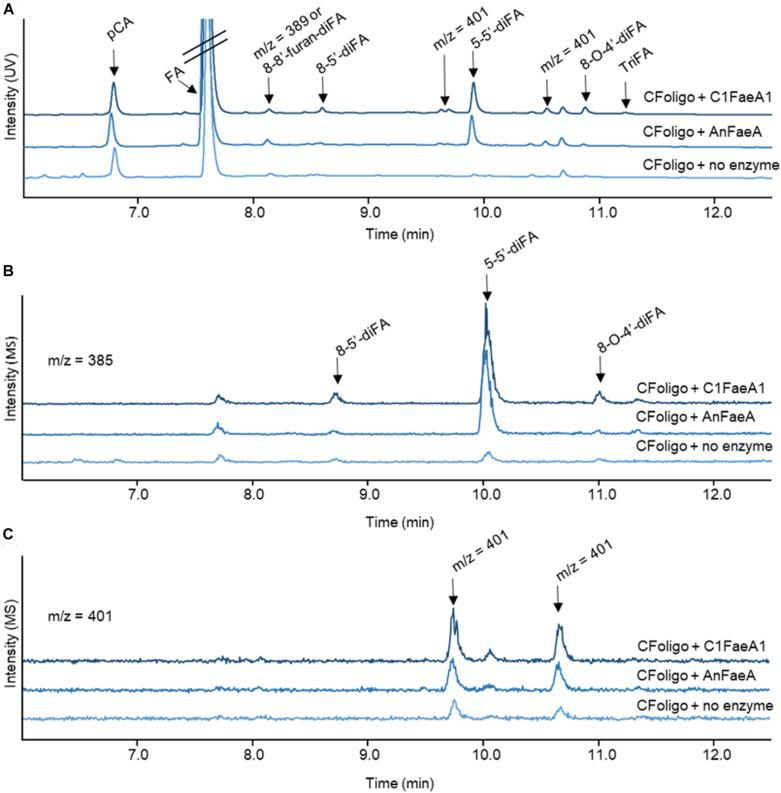 <t>RP-UHPLC-UV-ESI-MS/MS</t> elution profiles for corn fiber oligomers (CFoligo) incubated with FAEs. CFoligo was incubated with either C1FaeA1 or AnFaeA, and without FAE. (A) Elution profile based on UV (310 nm) showing the release of ferulic acid (FA); p -coumaric acid ( p CA), diferulic acids (diFAs) and triferulic acids (triFAs) from CFoligo after the incubation with FAEs. (B,C) Elution profile of diferulic acids (diFAs) corresponding to the m/z 385 and 401, respectively. The m/z values represent the mass loss of 1 Da (MS operation in negative mode).