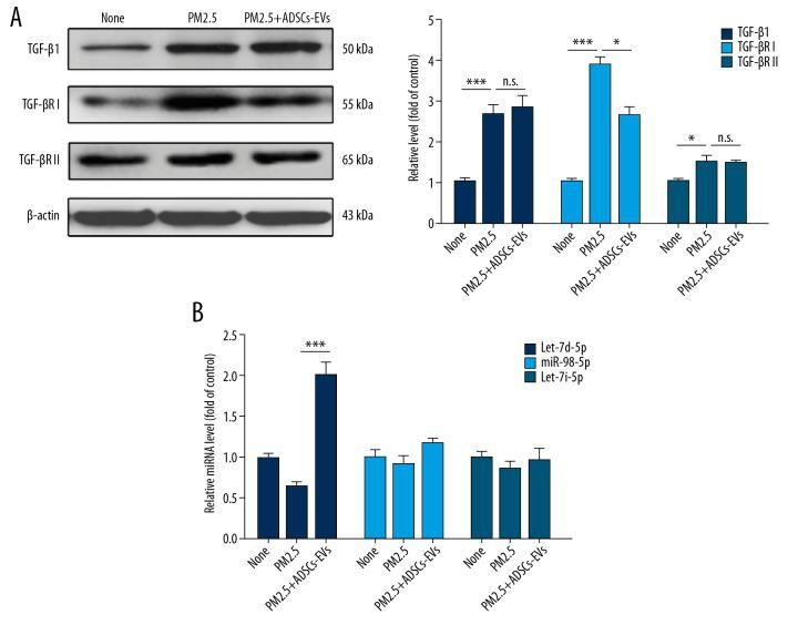ADSCs-EVs repressed TGF-βRI expression. ( A ) Western blotting analysis of TGF-β1, TGF-βRI, and TGF-βRII levels in ATII cells under different treatments. ( B ) The miRNA levels in ATII cells with different treatments were measured by qRT-PCR. (* p