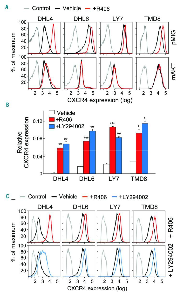 PI3K/AKT signaling regulates CXCR4 expression in BCR-dependent DLBCL cell lines. (A) BCR-dependent DLBCL cell lines, DHL4, DHL6, LY7 and TMD8, were retrovirally transduced with pMIG-mAKT1-IRES-GFP or pMIG-IRES-GFP vector, FACS-sorted for GFP expression, treated with 1 μM R406 or vehicle for 24 h (h), and analyzed for CXCR4 expression by flow <t>cytometry.</t> (B) BCR-dependent DLBCL cell lines were treated with 1 μM R406 (red), 10 μM LY294002 (blue) or vehicle for 24 h. Thereafter, CXCR4 expression was analyzed by qRT-PCR relative to PPIA. The P -values for vehicle versus R406 treated or vehicle versus LY294002 treated were determined with a one-sided Welch t -test. *** P
