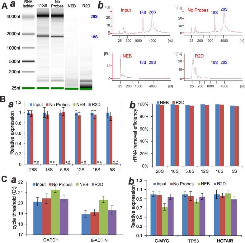 """Comparison of human rRNA removal specificity and efficiency between the RTR2D procedure and NEBNext® rRNA Depletion kit. Human total RNA (1.0 µg) was subjected to the RTR2D (R2D) (with the pooled rRNA probes) or the NEBNext® rRNA Depletion (NEB) protocol. The rRNA-depleted products were subjected to the Bioanalyzer. Representative gel image ( a ) and electropherograms ( b ) are shown. """"Input"""" and """"No probes (NP)"""" groups were used as controls. ( B ) TqPCR analysis of the residual rRNA species ( a ) and removal efficiency ( b ). """"**"""" p"""