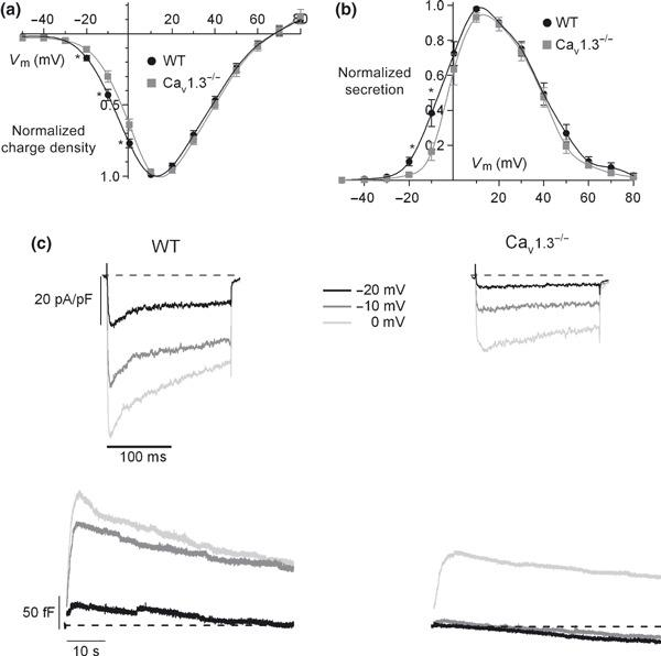 Contribution of Cav1 channel subtypes to the Ca 2+ charge and exocytosis of chromaffin vesicles. Ca 2+ charge density (a) and the corresponding exocytosis (b) versus the voltage in WT and Cav1.3 −/− cells. Data were obtained in the same experiments as in Fig. 3 ( n = 8–12, from four paired cultures of WT and Cav1.3 −/− cells, using 1–2 mice of each strain) and normalized as the percentage of charge density in control conditions at 10 mV, plotted as the mean ± SEM. (c) Original traces of Ca 2+ current density and the corresponding exocytosis elicited at −20 mV, −10 mV and 0 mV in WT and Cav1.3 −/− cells. * p