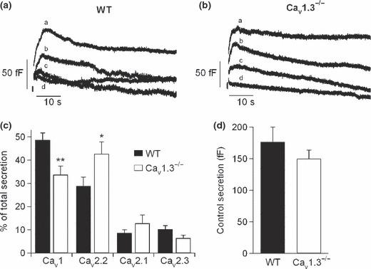Cav1 channel deletion compensated by the increased expression of other Ca 2+ channel types. Contribution of Cav channels to the exocytosis of neurotransmitters in mouse chromaffin cells from WT and Cav1.3 −/− mice. (a and b) C m traces recorded simultaneously to the Ca 2+ currents of Fig. 2(c and d) in WT and Cav1.3 −/− cells, respectively. (c) Percentage of total secretion attributed to each Ca 2+ channel type in WT (black columns) and Cav1.3 −/− cells (white columns). (d) Total secretion attained under control conditions for WT (black column) and Cav1.3 −/− cells (white column). Experiments were performed on seven paired cultures of WT ( n = 15 cells) and Cav1.3 −/− cells ( n = 11 cells), using 1–2 mice from each strain. Bars represent means ± SEM. * p