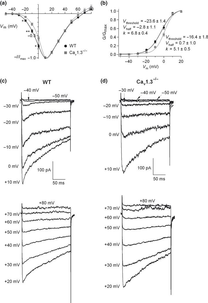 Voltage dependent activation of Ca 2+ channels. (a) I – V curves obtained under control conditions in WT and Cav1.3 −/− cells ( n = 8–12). 200 ms square‐step depolarizing pulses at increasing potentials (voltage increments of 10 mV), from −50 mV to 80 mV, were applied every 1 min. Data were obtained from four paired cultures of WT and Cav1.3 −/− cells, using 1–2 mice from each strain and normalized as the percentage of current in control conditions at 10 mV, plotted as the mean ± SEM. * p
