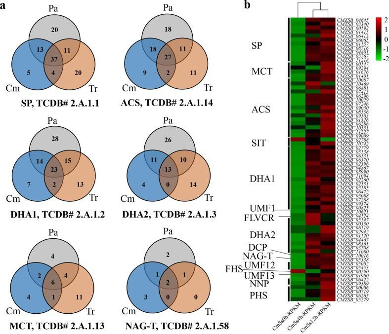 Distribution of the MFS transporters in the C. minitans ZS-1 genome and the DEGs involved in mycoparasitism. (a) Orthologous proteins groups distribution of SP, ACS, DHA1, DHA2, MCT and NAG-T in MFS transporters in three groups of Cm, Tr and Pa. (b) Gene expression of MFS transporters, which detected significantly changed during the mycoparasitism stages of 0, 4 and 12 h, respectively, in C. minitans . SP: Sugar Porter Family, ACS: Anion:Cation Symporter Family, DHA1: Drug:H+Antiporter-1 (12 Spanner) Family, DHA2: Drug:H+Antiporter-2 (14 Spanner) Family, MCT: Monocarboxylate Transporter Family, NAG-T: N-Acetylglucosamine Transporter Family, FHS: Fucose: H+Symporter Family, PHS: Phosphate: H+Symporter Family, OCT, Organic Cation Transporter Family, V-BAAT, Vacuolar Basic Amino Acid Transporter Family, SIT: Siderophore-Iron Transporter Family, LplT: Lysophospholipid Transporter Family, NNP: Nitrate/Nitrite Porter family, UMF1: Unidentified Major Facilitator-1 Family, LAT3: l -Amino Acid Transporter-3 Family, UMF12: Unidentified Major Facilitator-12 Family, UMF23: Unidentified Major Facilitator-23 Family, MHS: Metabolite:H+Symporter Family, SHS: Sialate:H+Symporter Family, FLVCR: Feline Leukemia Virus Subgroup C Receptor/Heme Importer Family, DCP: Major Facilitator Superfamily Domain-containing Protein 5 Family, Pl-Cu-UP: Plant Copper Uptake Porter, UMF30: Unidentified Major Facilitator-30 Family, YnfM: Acriflavin-sensitivity Family, PAT: Peptide/Acetyl-Coenzyme A/Drug Transporter Family, OFA: Oxalate:Formate Antiporter Family, ACDE: Aromatic Compound/Drug Exporter Family, PCFT/HCP: Proton Coupled Folate Transporter/Heme Carrier Protein Family, Pht: Proteobacterial Intraphagosomal Amino Acid Transporter Family. Sclsc2, S. sclerotiorum strain 1980; Sclbo1, S. borealis ; BcDW1, B. cinerea strain DW1; B05.10, B. cinerea strain B05.10; BcT4, B. cinerea strain T4; Parno2, P. nodorum strain SN15; Pyrtr1, P. tritici-repentis strain Pt-1C-BFP; Triat2, T. atroviride ; Triha1, T