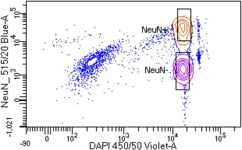 Florescence assisted cell sorting (FACS) of NeuN stained nuclei. Representative image showing FACS separation of NeuN+ and NeuN- DAPI stained nuclei. Boxes indicate gating for populations of nuclei that were collecting for gDNA isolation. Only NeuN+ gDNA was utilized for this work.