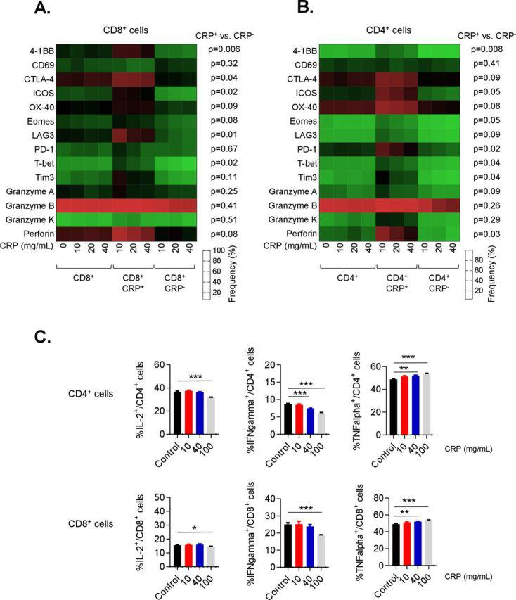 C reactive protein (CRP) affects the function of activated T cells. Expression of checkpoint, stimulatory and cytolytic proteins by flow cytometry on activated CD8 (A) and CD4 (B) T cells treated with CRP at 10, 20 and 40 µg/mL as a heat map. Representative data from three patients. (C) CD3+ T cells isolated from baseline peripheral blood mononuclear cells (PBMC) samples of patients with melanoma prior to any treatment were cultured for 72 hours with or without CRP at doses of 10, 40 and 100 µg/mL, and subsequently stimulated for 4 hours with phorbol 12-myristate 13-acetate (PMA)/ionomycin for analysis of intracellular cytokine production (interferon (IFN)-γ, tumor necrosis factor (TNF)-α and interleukin (IL)-2) and granzyme B. Representative data from five patients. Error bars are +SEM for triplicate samples assessed. **P