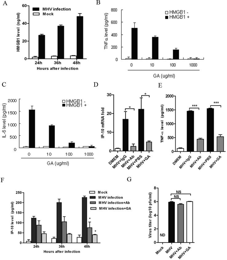 GA inhibits immune activation triggered by HMGB1 in vitro . (A) HMGB1 release assay in the media of BNL.CL2 hepatocyte cells after MHV infection (MOI =0.5). D2SC cells were co-incubated with HMGB1 (10 μg/ml, HMGB1-Flag protein was purified using anti-Flag M2 Affinity Gel) and different amounts of GA for 6 hours. The culture supernatants were subsequently collected and analyzed for TNF-α (B) and IL-6 (C) production. (D) IP-10 mRNA expression analysis and (E) secreted TNF-α protein levels assay in RAW 264.7 cells stimulated by supernatant from infected BNL.CL2 and treated with GA (100 μg/ml) or anti-HMGB1 Ab (10 μg/ml) for 8 hours. (F) IP-10 secretion analysis in the infected BNL.CL2 cellular supernatants in the presence of GA (100 μg/ml) or HMGB1 neutralizing antibody (10μg/ml). (G) Virus titer of infected BNL.CL2 treated with control, GA (100 μg/ml) or anti-HMGB1 Ab (10 μg/ml). The data are represented as the mean ± SEM. * indicates P