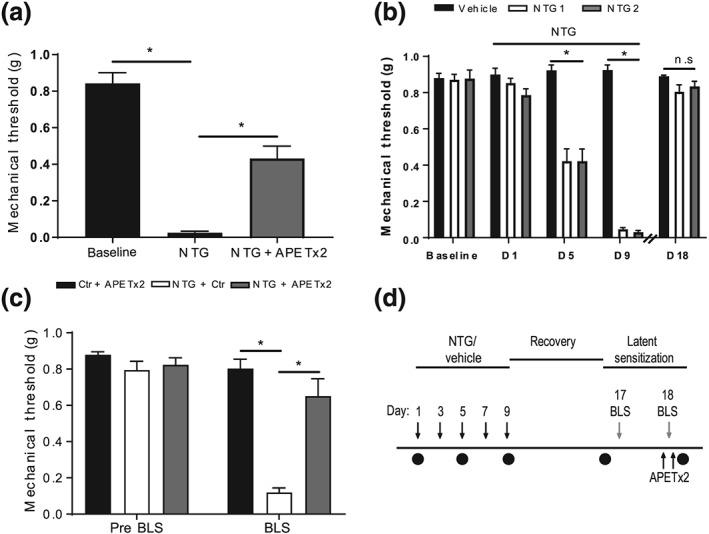 APETx2 inhibits nitroglycerin‐evoked periorbital mechanosensitivity in mice. There was a significant overall difference in periorbital mechanosensitivity across all groups (a). Acute nitroglycerin (NTG) induced a decreased periorbital mechanosensitivity in mice that was partially reversed by pretreatment with APETx2. Chronic NTG administration in mice (NTG‐primed) produced a basal periorbital mechanosensitivity (b) that reached significance from Day 5 when compared to vehicle control mice. Following withdrawal of NTG periorbital mechanosensitivity returned to that of the non‐sensitised vehicle control group. Subsequent exposure to bright light stress (BLS) resulted in a significant overall difference in periorbital mechanosensitivity (c). NTG‐primed mice demonstrated an increased periorbital mechanosensitivity when compared to vehicle control and APETx2 treated mice. The periorbital mechanosensitivity evoked in response to BLS was blocked by pretreatment with APETx2, returning to that of vehicle control and APETx2 treated mice. Timeline of latent sensitisation to BLS protocol (d). Animals were sensitised with chronic administration of NTG (10 mg·kg −1 , i.p.) every second day for 9 days. Periorbital mechanical sensitivity was assessed with the von Frey assay (black circles) before and 2‐hr post NTG treatment on Days 1, 5, and 9. Animals were recovered for 1 week and then on Day 17 mechanical sensitivity was reassessed prior to 1 hr of BLS. On Day 18, animals were treated with either APETx2 (0.23 mg·kg −1 ) or vehicle control 30 min prior to and again 30 min post BLS. Mechanical sensitivity was then assessed 2‐hr post BLS. * P