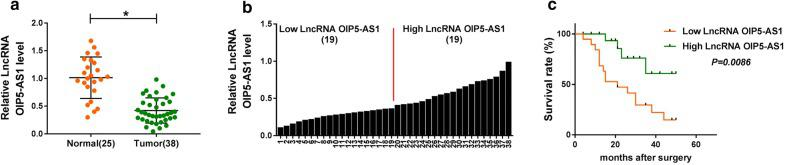 LncRNA OIP5-AS1 was low expressed in bone marrows of MM patients. a , b The relative expression of lncRNA OIP5-AS1 in bone marrows of 38 MM patients and 25 healthy donors was tested by qRT-PCR assay. c Kaplan–Meier analysis for the prognosis of 38 MM patients was done. * P