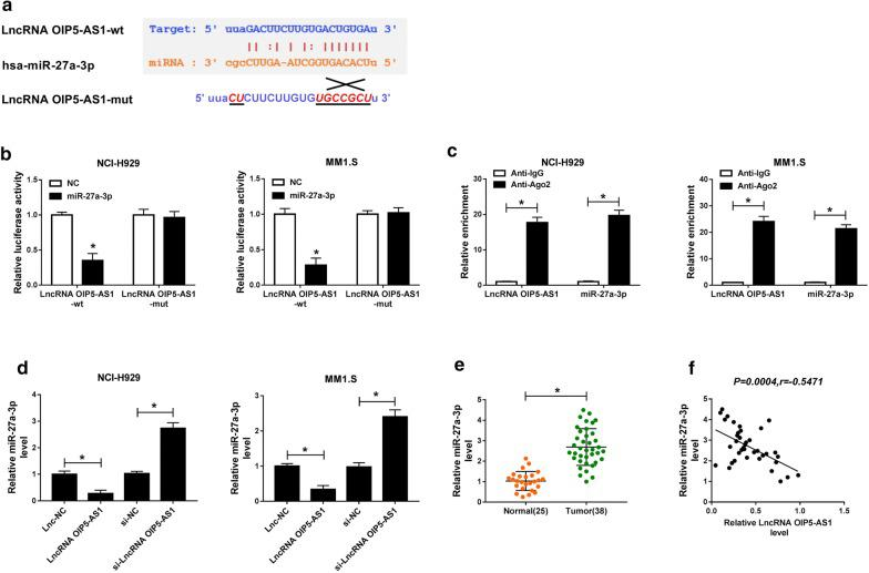 LncRNA OIP5-AS1 directly targeted miR-27a-3p. a The binding sites between OIP5-AS1 and miR-27a-3p as well as the mutant were shown. b Dual-luciferase reporter assay was carried out to measure the luciferase activity in LncRNA OIP5-AS1-wt group and LncRNA OIP5-AS1-mut group of NCI-H929 and MM1.S cells. c The levels of OIP5-AS1 and miR-27a-3p were evaluated after Ago2 or IgG RIP by qRT-PCR assay. d The expression of miR-27a-3p in NCI-H929 and MM1.S cells transfected with Lnc-NC, LncRNA OIP5-AS1, si-NC or si-LncRNA OIP5-AS1 was analyzed by qRT-PCR assay. e The relative expression of miR-27a-3p in bone marrows of 38 MM patients and 25 healthy donors was tested by qRT-PCR assay. f The correlation between the expression of OIP5-AS1 and miR-27a-3p was determined via Pearson correlation analysis. * P