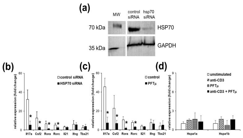 Heat shock protein 70 (HSP70) expression and function manipulation affects Th17 gene expression. ( a ) Western blot analysis of HSP70 and glyceraldehyde 3-phosphate dehydrogenase <t>(GAPDH)</t> proteins in the EL4 TCR + cells that were transfected with HSP70 siRNA or control in relation to the parallel molecular weight (MW) marker separation blot. Representative results from two independent experiments are shown. Gene expression analysis of the EL4 TCR + cells following anti-CD3 stimulation that has been transfected with HSP70 siRNA ( b ) or treated with pifithrin-μ (PFTμ) (10 μM) or with a control (dimethyl sulfoxide; DMSO) ( c ). ( d ) HSP70 gene expression changes of the EL4 TCR + cells following anti-CD3 stimulation or/and PFTμ (10 μM) treatment. Data represent mean +/− SD. * p