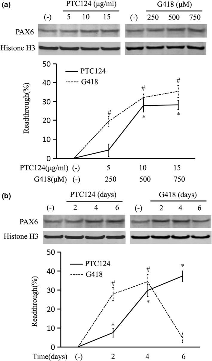 Readthrough efficiency of nonsense suppression drugs. The readthrough efficiency was calculated as a percentage of increased full‐length PAX6 over the solvent‐treated control (−) using lymphocytes of patient III3 by Western blot analysis. Histone H3 was used as an internal control. (a) The readthrough in response to varying doses of ataluren (PTC124) and geneticin (G418). Cells were harvested at four days of treatment for analysis. (b) The readthrough in response to varied treatment times, with optimized doses of 10 μg/ml PTC124 and 500 μM G418. * p