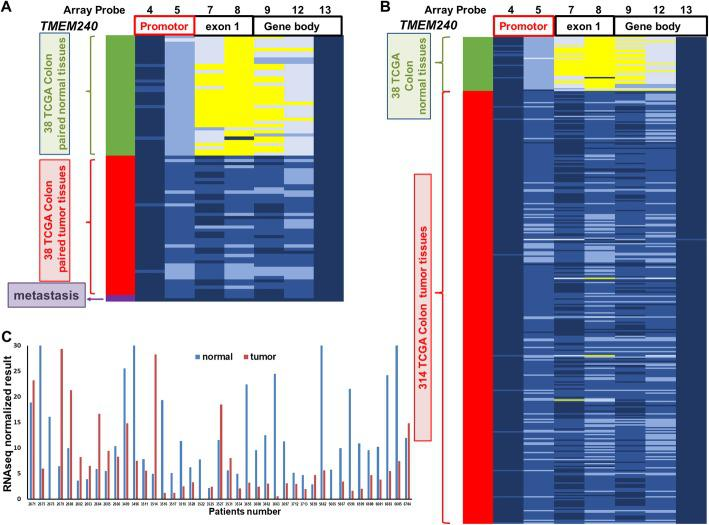 TMEM240 DNA methylation and mRNA analysis from the TCGA dataset. Differentially methylated CpG sites in TMEM240 were identified in a 38 adjacent normal colorectal tissues, 38 matched colorectal carcinoma (CRC) tumors, and b 314 CRC tumors by an Illumina Methylation 450K array-based assay. c RNA sequencing data for TMEM240 in 41 adjacent normal colorectal tissues and 41 matched CRC tumors