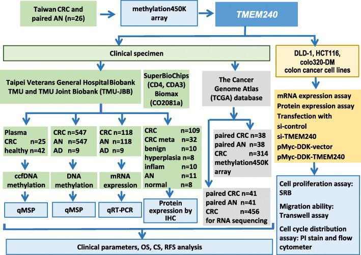 Flowchart of the study design, datasets, and specimens used. For each step, the sample types and number of samples used for the analyses are indicated. CRC, colorectal cancer; AN, adjacent normal; AD, benign adenoma; inflam, inflammation; normal, normal tissues; ccfDNA, circulating cell-free DNA; QMSP, quantitative methylation-specific PCR; qRT-PCR, quantitative reverse-transcription PCR; IHC, immunohistochemistry; methylation450K array, Illumina Infinium HumanMethylation450 BeadChip array; OS, overall survival; CS, cancer-specific survival; RFS, recurrence-free survival; SRB, sulforhodamine B assay; PI, propidium iodide staining