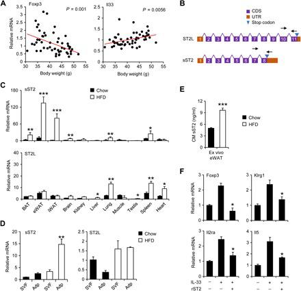 Obesity-associated reduction of adipose T regs is linked to elevated expression and secretion of sST2. ( A ) Correlation between eWAT Foxp3 and IL-33 mRNA levels and body weight in a cohort of C57BL/6J mice fed HFD for 8 weeks. ( B ) Schematic diagrams of the ST2 isoforms. Arrows indicate the location of isoform-specific qPCR primers. ( C ) qPCR analysis of sST2 and ST2L expression in a panel of tissues from mice fed chow (filled, n = 4) and HFD (open, n = 4). Data in (C) represent means ± SEM. * P