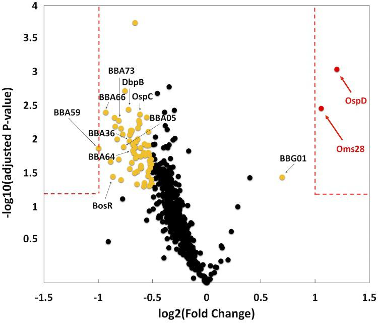 Proteomic evaluation of the parent relative to the ittA mutant. Tandem Mass Tags (TMT) was used to determine the relative abundance of the total proteome of three biological replicates of parent and ittA mutant strains grown under conditions that induce proteins important during mammalian infection. Volcano plot depicts log 2 fold change ( x -axis) and log 10 adjusted p -value ( y -axis) of proteins identified from parent versus the ittA sRNA mutant strain. Single proteins are plotted as dots. Proteins outside of the red dashed boxes are significant. Red spots have a +/- 2 fold change difference in the parent strain relative to the ittA mutant strain and a p- value