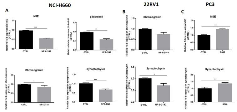 ( A , B ): Effects of CaSR inhibitor on the expression of NE markers in NCI-H660 and 22RV1. Cells were treated for 72 h (NCI-H660) or 24 h (22RV1) with a CaSR inhibitor, NPS-2143 at 1 µM (NCI-H660) or 300 nM (22RV1). ( C ): Effects of CaSR activator on the expression of NE markers in PC3. Cells were treated for 24 h with a CaSR activator, R-568 (10 µM) in presence of calcium (1.2 mM). qPCR results are normalized to control condition and are expressed as mean ± S.E.M. The statistical differences are indicated: * p