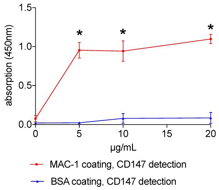 Mac-1 and CD147 interaction. Mac-1/CD147 interaction was assessed using an ELISA with recombinant Mac-1 or BSA (c ontrol) coating. Recombinant CD147 was added in ascending concentrations for 1 h. Evaluation was facilitated using a <t>biotinylated</t> secondary anti-CD147 antibody with a streptavidin/HRP complex. Changes in absorption of 3,3′,5,5′-tetramethylbenzidine were measured at 450 nm. Measurements from 6 independent experiments were analyzed, * indicates p