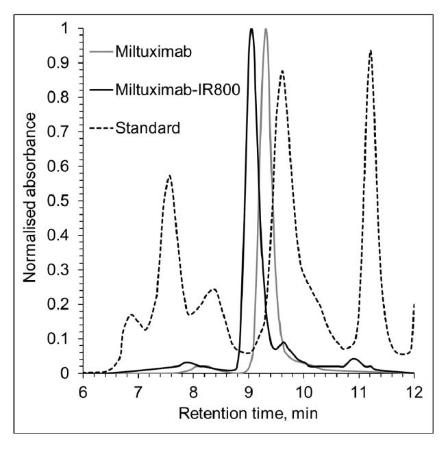 Size exclusion chromatography of Miltuximab ® and Miltuximab ® -IR800. Miltuximab ® -IR800 conjugate was tested for purity and conjugation efficiency by size-exclusion chromatography using Agilent Bio SEC-3 column tuned to UV detection at 280 nm. The conjugation of IR800 dye to Miltuximab ® produced a single peak with a shift to the left indicating a shorter retention time, consistent with an increase of the molecule size. A black dotted line represents the protein standard that shows the following peaks from left to right: thyroglobulin (670 kDa), y-globulin (158 kDa), and ovalbumin (44 kDa).