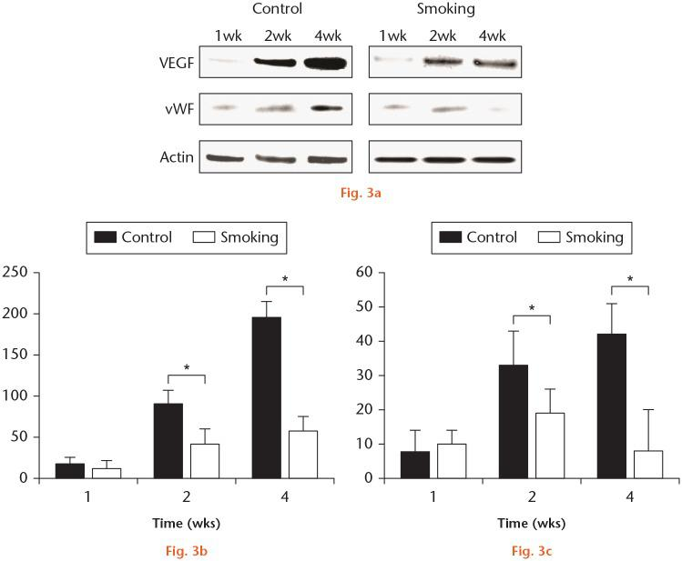 Cigarette smoke inhalation reduced the expression of vascular endothelial growth factor (VEGF) and von Willebrand factor (vWF) protein in the fracture callus. a) Western blot analysis was used to detect the expression of VEGF and vWF protein in the fracture callus. β-actin was used as an internal control (n = 4). One representative data set obtained from repeated experiments is shown. b) Quantified data of Western blot analysis for the expression of VEGF in the smoking group, two and four weeks after the fracture (n = 4). c) Quantified data of Western blot analysis for expression of vWF in the smoking group, two and four weeks after the fracture (n = 4). Data are shown as the mean (SD) of six experiments. *p