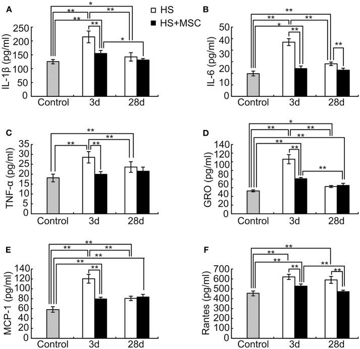 MSC administration modulates inflammatory and chemotactic cytokines in the brain tissue of HS rats. At different time points after MSCs or saline infusion, the brain tissue of rats in each group were collected and homogenized in 10 volumes of ice-cold PBS. The IL-1β (A) , IL-6 (B) , TNF-α (C) , IL-10 (D) , MCP-1 (E) , and Rantes (F) levels in the rat's brain tissue lysates were assayed. n = 10 rats per group. * P