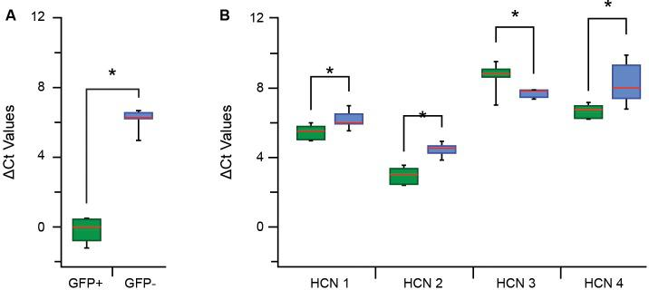 Quantitative polymerase chain reaction (qPCR) ΔCt analysis for hyperpolarization-activated cyclic nucleotide-gated channel (HCN channel) subunits in proprioceptive DRG cells. (A) Box and whisker plot show group data comparing ΔCt for GFP expression in GFP+ (green) and GFP− (blue) samples (normalized to β actin expression). The low GFP ΔCt in GFP+, but not GFP−, confirm high expression in this sample and the reliability of this sampling approach. (B) Box whisker plots plot shows group data comparing ΔCt values for HCN1–4 in GFP+ (green) and GFP− (blue) samples. The expression of all HCN subunits was significantly different between GFP+ and GFP− groups (where * p