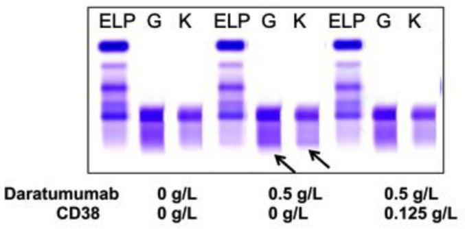 A representative of plasma cell myeloma (PCM) patient sera with endogenous IgG (G) kappa (K) M-protein spiked with DARA resulted in a clear IgG kappa M-protein (indicated by arrows) on sIFE gel. Incubation of DARA spiked PCM serum with 0.125 g/L of biotinylated recombinant CD38 and magnetic beads successfully extracted the DARA with a magnetic stand and completely eliminated the IgG kappa component on sIFE gel with all tested concentrations of recombinant CD38. CD38/DARA complex does not affect the endogenous M-protein migration.