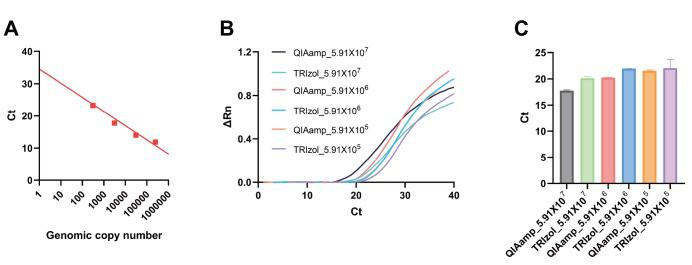 Determination of detection efficiency and limit of rtPCR system using Lentivirus. (A) A standard calibration curve of Ct vs. genomic copy number was generated based on rtPCR results from LTR targeting primer set and known genomic copy number of LTR. (B) rtPCR results for RNA extraction by QIAmp kit or Trizol-based method. The known number of Lentivirus was tested with the two extraction methods and compared. (C) The average Ct values are compared between QIAmp and Trizol methods.
