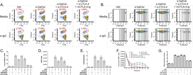 NKT cell activation is not affected by CTLA-4 blockade or activation, but is inhibited by CD80/86 blockade. ( A ) Representative plots of NKT cell populations (αGC:CD1d tetramer+TCRβ+) after 3-day co-culture. ( B ) Representative plots of NKT cell population proliferation with division bins denoted after 3-day co-culture. ( C ) NKT cell percentage ( D ) Total NKT cell number, and ( E ) NKT cell fold expansion post stimulation. ( F ) The precursor proliferation curve. ( G ) The mean division number of proliferating precursors. All data displayed in graphs correspond to mean +/− SEM of 3 biological replicates. Statistical significance was determined using one-way ANOVA followed by Bonferroni tests. Relevant statistical analyses are discussed in the text. Flow cytometry gating strategy outlined in Materials and Methods.