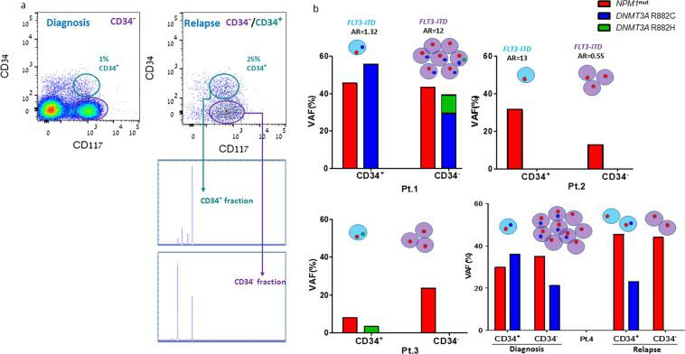 Mutation variants identified in CD34 + and CD34 - AML blast subsets and their allelic frequency. ( a ) FACS analysis shows blast cells derived from the same AML patient at diagnosis and relapse, and sorted to CD34 + CD117 + and CD34 - CD117 + fractions. DNA was extracted from each fraction and PCR products were examined by genetic analyzer for FLT3-IDT mutation. Mutant FLT3-ITD (right column) and wt- FLT3 (left column) alleles are shown in each CD34 compartment. ( b ) BM blasts from 4 AML patients were sorted into CD34 + CD117 + and CD34 - CD117 + fractions. Genomic DNA was extracted from each subset; targeted sequencing conducted using PGM Ion Torrent, qualified by coverage of ~2000 reads, was performed for: NPM1 and DNMT3A mutations. All the 4 patients carried NPM1 mut (TCTG insertion) and FLT3-ITD mutations. In the DNMT3A hotspot region, two variants were identified: R882H and R882C. The allelic frequency of the variants in CD34 + and CD34 - subpopulations is presented for each patient. The calculated allelic ratio (AR) for FLT3-ITD mutation (detected using the <t>Genescan</t> method) in each fraction is presented, when available. The circles, denoting cells, represent the ratio between the numbers of blast cells in each fraction.