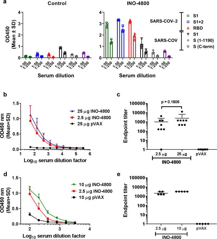 Humoral responses to SARS-CoV-2 and SARS-CoV antigens in BALB/c mice after a single dose of INO-4800. BALB/c mice were immunized on day 0 with indicated doses of INO-4800 or pVAX-empty vector as described in the methods. a Protein antigen binding of IgG at 1:50 and 1:250 serum dilutions from mice at day 14 immunized with 25 µg of INO-4800 or pVAX. Data shown represent mean OD450 nm values (mean + SD) for each group of 3 mice. b SARS-CoV-2 S1 + 2 or c SARS-CoV-2 RBD protein antigen binding of IgG in serial serum dilutions from mice at day 14. Data shown represent mean OD450 nm values (mean + SD) for each group of eight mice ( b , c ) and five mice ( d , e ). Serum IgG binding endpoint titers to ( c ) SARS-CoV-2 S1 + 2 and ( e ) SARS-CoV-2 RBD protein. Data representative of two independent experiments. Values depicted are mean +/− SD. P values determined by Mann–Whitney test.