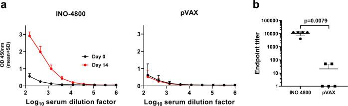 Humoral responses to SARS-CoV-2 in Hartley guinea pigs after a single dose of INO-4800. Hartley guinea pigs were immunized on Day 0 with 100 µg INO-4800 or pVAX-empty vector as described in the methods. a SARS-CoV-2 S protein antigen binding of IgG in serial serum dilutions at day 0 and 14. Data shown represent mean OD450 nm values (mean + SD) for the five guinea pigs. b Serum IgG binding titers (mean ± SD) to SARS-CoV-2 S protein at day 14. Values depicted are mean ± SD. P values determined by Mann–Whitney test.