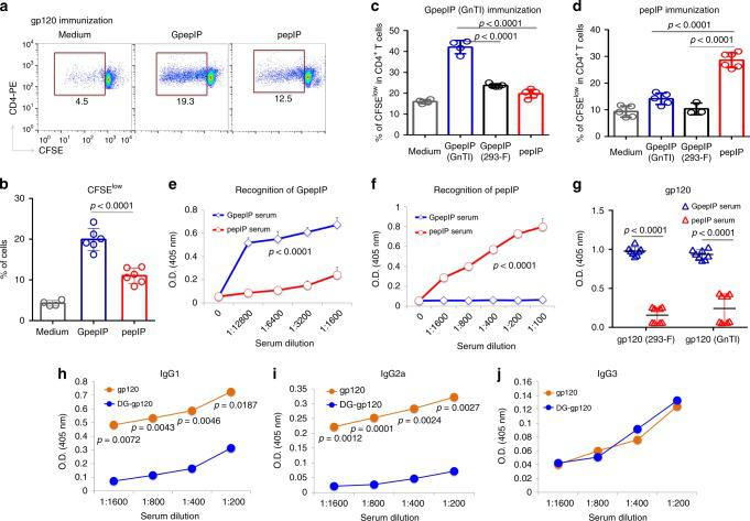 The glycopeptide epitope GpepIP elicits a glycan-dependent cellular and humoral immune response. a , b CD4 + T cells obtained from mice immunized with gp120 were stimulated in vitro in the presence of mitomycin C-treated APCs pulsed with either GpepIP or pepIP, and T cell proliferation was examined by flow cytometry with use of CFSE fluorescence dilution through cell division. c , d CD4 + T cells obtained from mice immunized with GpepIP expressed in GnT1 −/− cells c or with pepIP d were stimulated with GpepIP expressed in GnTI −/− or 293F cells or with pepIP in the presence of mitomycin C-treated APCs, and T cell proliferation was examined by CFSE flow cytometry. e , f Antisera from mice immunized with GpepIP or pepIP were titrated for IgG binding to immobilized GpepIP e or pepIP f by ELISA. g Antisera from GpepIP and pepIP immunization groups recognize gp120 expressed in 293-F and GnTI −/− cells differentially as measured by ELISA using a serum dilution 1:400. h – j Serum from mice immunized with GpepIP expressed in GnT1 −/− cells were collected 7 days after booster immunization. As a control, serum from naïve mice was used as background. Titers of IgG1 h , IgG2a i , and IgG3 j for recognition of glycosylated gp120 or deglycosylated gp120 were measured by ELISA. Data was presented after subtracting background. Representative results are shown from one of three independent experiments performed. (mean ± s.d.). b medium n = 4; GpepIP and pepIP n = 6 independent experiments. c medium and GpepIP (GnTI) n = 4; GpepIP (293-F) and pepIP n = 5 independent experiments. n = 4 for e and f ; n = 8 for g ; n = 2 independent experiments for h , i , and j . P -values were determined using Student's two-sided t -tests. Source data are provided as a Source Data file.