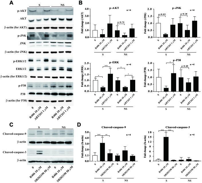 R406 inhibits phosphorylation of p38 MAPK in senescent HDFs more than non-senescent HDFs. ( A , B ) Senescent (S) and non-senescent (NS) HDFs were treated with DMSO, R406 (10 μM), and ABT263 (1 μM) for one day and western blot assays using anti-MAPKs antibodies were conducted. ( C , D ) Senescent HDFs were respectively treated with DMSO, R406 (10 μM), and SB202190 (p38 inhibitor, 50 μM) for one day. Then, western blot assays were conducted to determine triggering apoptosis by caspase cleavage. *p