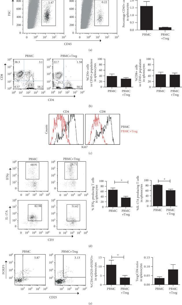 Treg infusion affects systemic proinflammatory cytokine production by T cells. Representative flow cytometry pictures and quantitative analysis of systemic human CD45+ and CD3+ T cells harvested from the mouse spleen of SCID beige mice infused with PBMC with or without Treg. (a) Percentage of human CD45 cells. (b) Percentage of human CD4+ and CD8+ cells within human CD45+ cells. (c) Representative example of the percentages of dividing (Ki67+) CD4+ and CD8+ cells ( n = 3). (d) Percentage of human IFN γ and IL-17A-secreting T cells. (e) Frequency of CD4+CD25+FOXP3+ cells within CD45+ cells and Treg : CD4 ratio analysis. Mean ± SEM is shown for (a, b, d) ( n = 3‐8). Statistical significance was analysed by the Mann–Whitney U test. ∗ p value