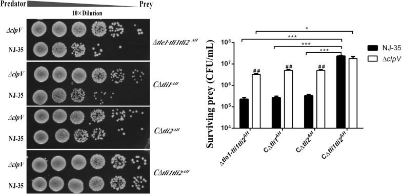 Tli1Tli2 AH are the cognate immunity proteins to Tle1 AH . A. <t>hydrophila</t> NJ-35 and the ∆ clpV strain were used as the predator strains. ClpV , which encodes a putative ATPase required for T6SS function, was deleted to construct the T6SS − strain (∆ clpV ). The prey strains included the gene deletion mutant ∆ tle1 - tli1tli2 AH and its single or double restoration strains of immunity genes, they are, C∆ tli1 AH (∆ tle1 - tli1tli2 AH / pMMB- tli1 AH ), C∆ tli2 AH (∆ tle1 - tli1tli2 AH / pMMB- tli2 AH ) and C∆ tli1tli2 AH (∆ tle1 - tli1tli2 AH / pMMB- tli1tli2 AH ). The predator and prey strains were cultured at a ratio of 5:1, and surviving prey cells were serially diluted and determined on the LB plate containing antibiotics. Data are presented as the mean ± standard deviation (error bars) of three independent experiments. ## P