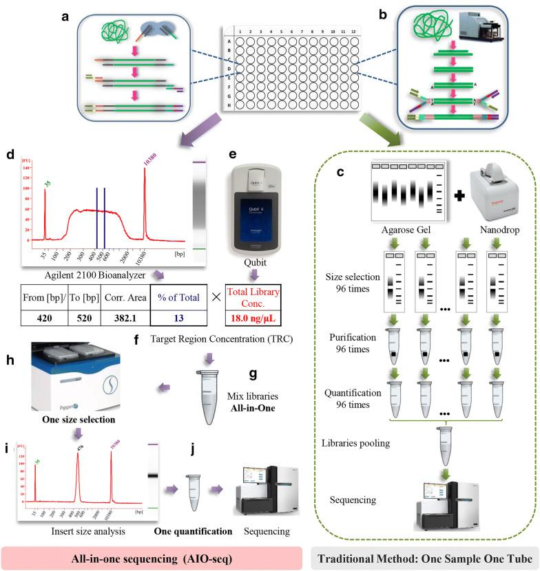 Flowchart for the All-in-One sequencing (AIO-seq) method. a The libraries were prepared using Tn5 transposase. b The process of mechanical fragmentation was used to prepare the libraries. c In the traditional protocol, the size selection, and quantification were processed using a one sample one tube method. d With the AIO-seq method, the library analyzed by the Agilent 2100 Bioanalyzer will give the fragment distribution pattern and the ratio of the target region (between the two blue lines) to the total library. e The concentration of the total library could be obtained by Qubit™ 4.0 Fluorometer. f The target region concentrations (TRC) were calculated within each library by multiplying the proportion of the target region from ( d ) and the total library concentration from ( e ). g Mixing the libraries in one tube according to the calculated TRC and their expected yields of the sequence data. h – i One size selection by Sage HT. j Quantification of the selected fragment by qPCR and sequencing