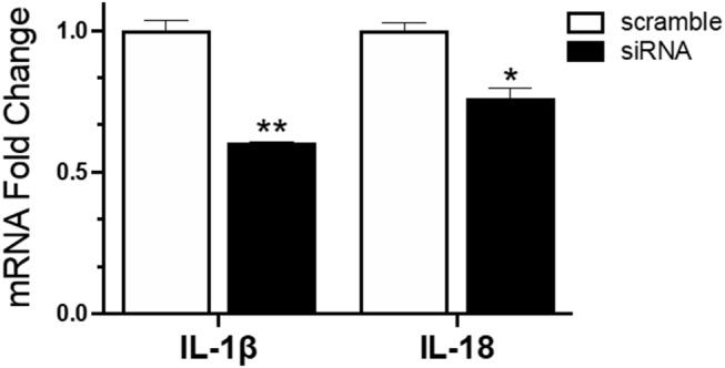 Reduced mRNA expression of IL-1β and IL-18 in IAV infected NLRC5 KD cells. MQ-NCSU cells were transfected with NLRC5 siRNA or non-specific control siRNA (scramble). The relative mRNA expression of IL-1β and IL-18 was determined at 32 hpt by quantitative RT-PCR and normalized to the housekeeping gene HMBS. Data represents average of three biological replicates with error bars showing standard deviation. * p ≤ 0.05, ** p ≤ 0.01.